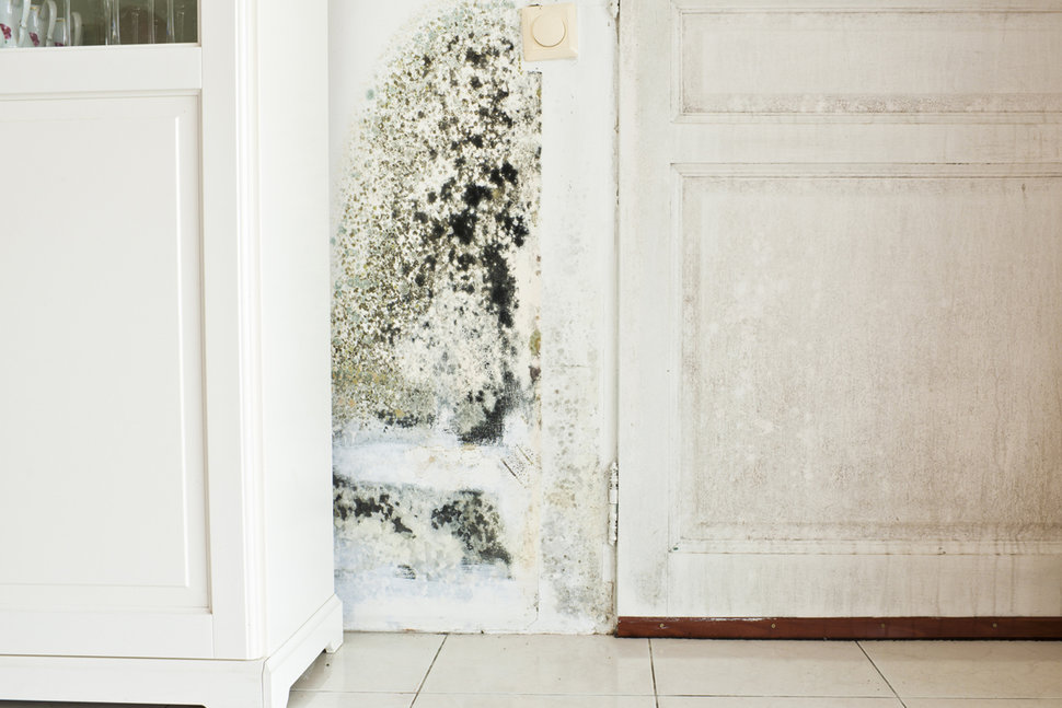 The Dangers Of Living With Mould In The House