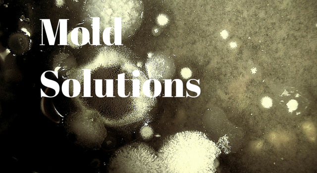 prevent mould tips from ibx services