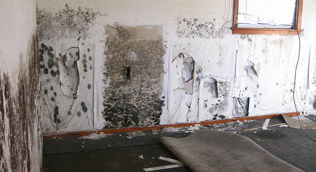 Tips To Prevent Mould Growth