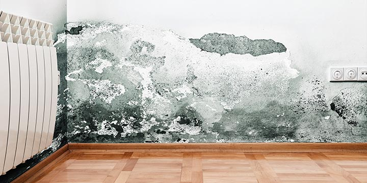 The Dangers of Mould and Mildew in your Home or Office