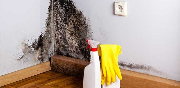 Facts about Mould and Dampness