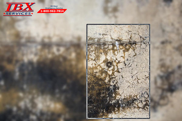 Mould Symptoms and Health Effects