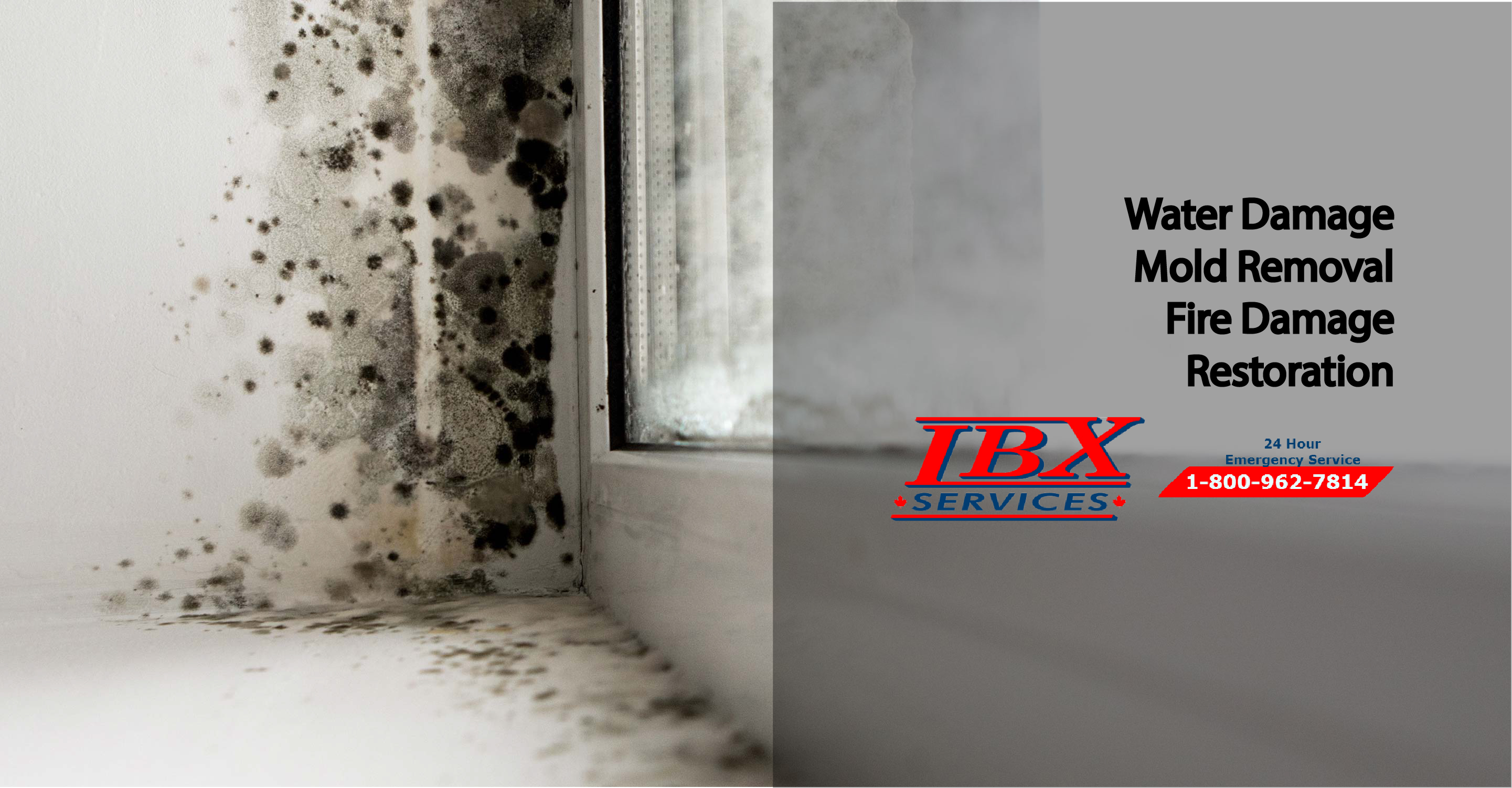 Why is mold growing in my home? | Mold Spores