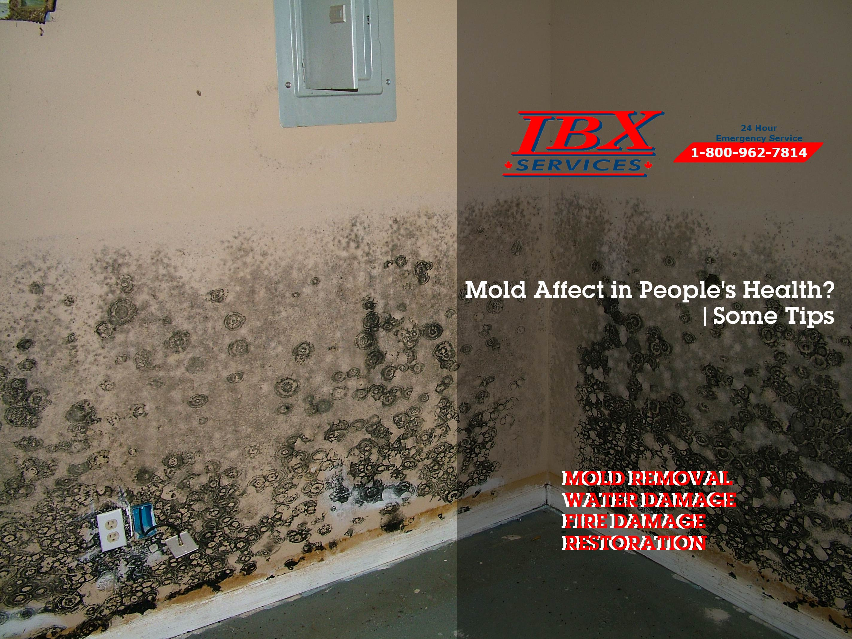 Mold Affect in People's Health? | Some Tips