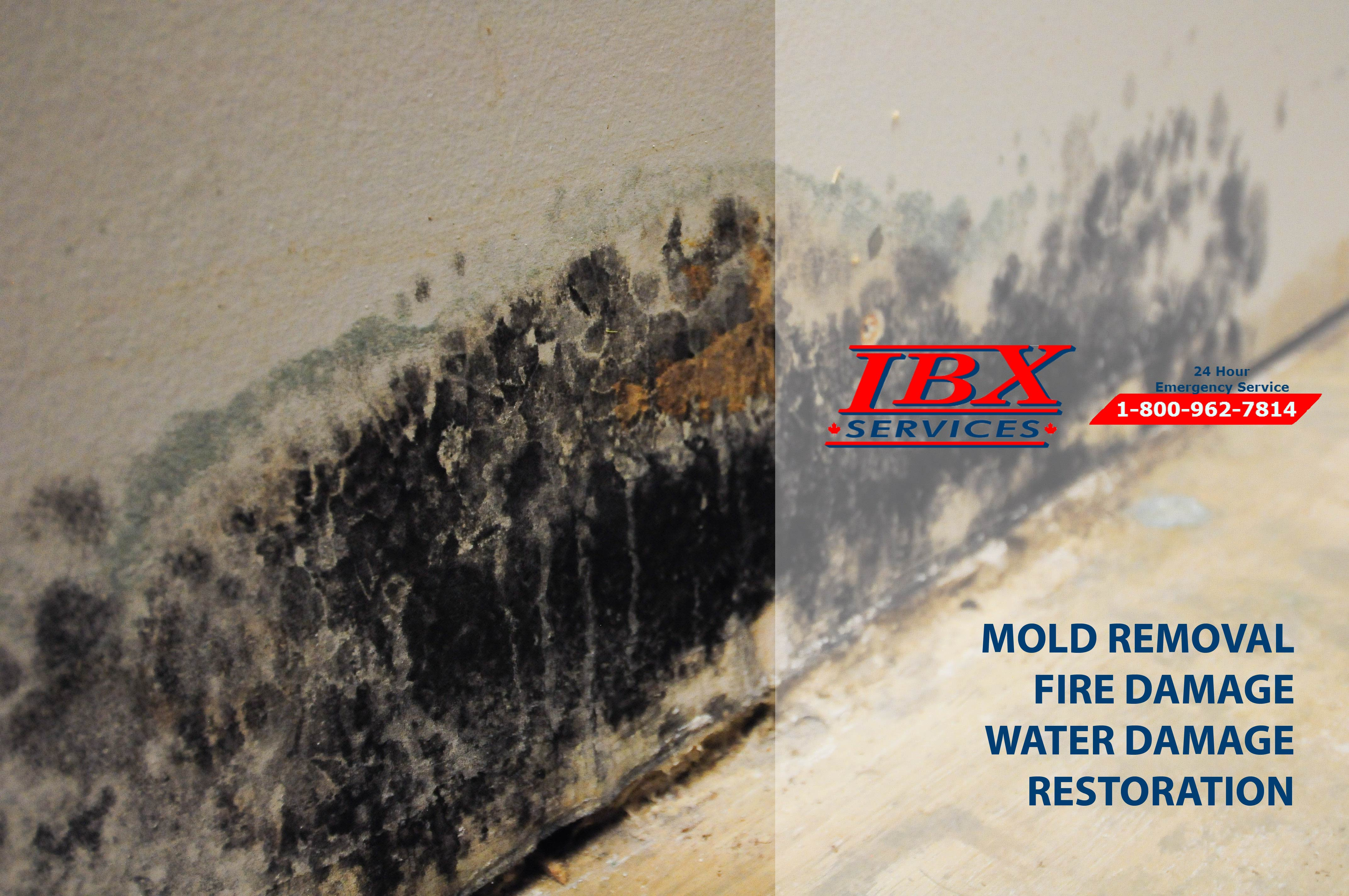 MOLD | INFORMATION ABOUT ITS CONSEQUENCES
