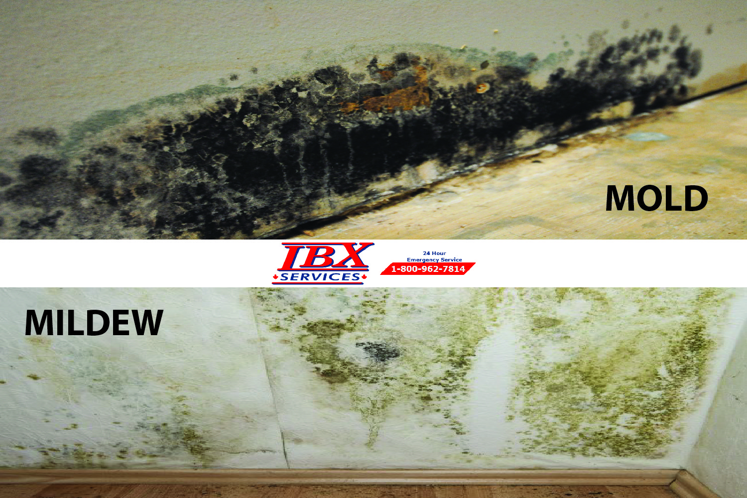 Mildew & Mold | Places Where They Grow