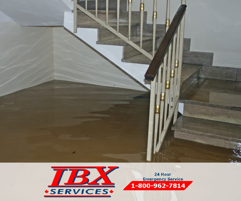 Choose the Right Water Damage Restoration Company