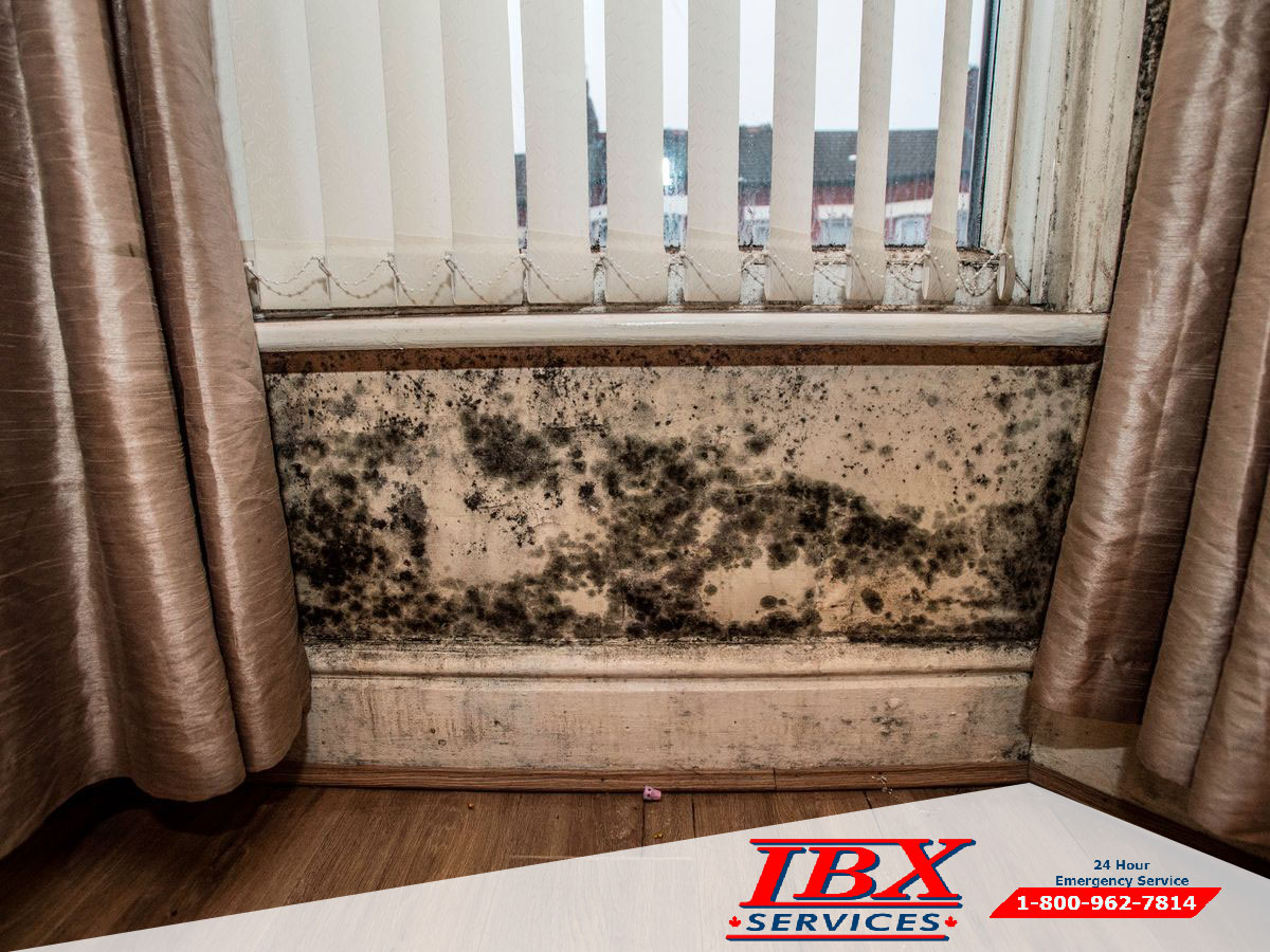Mold Removal | Steps Proper Of Disappear