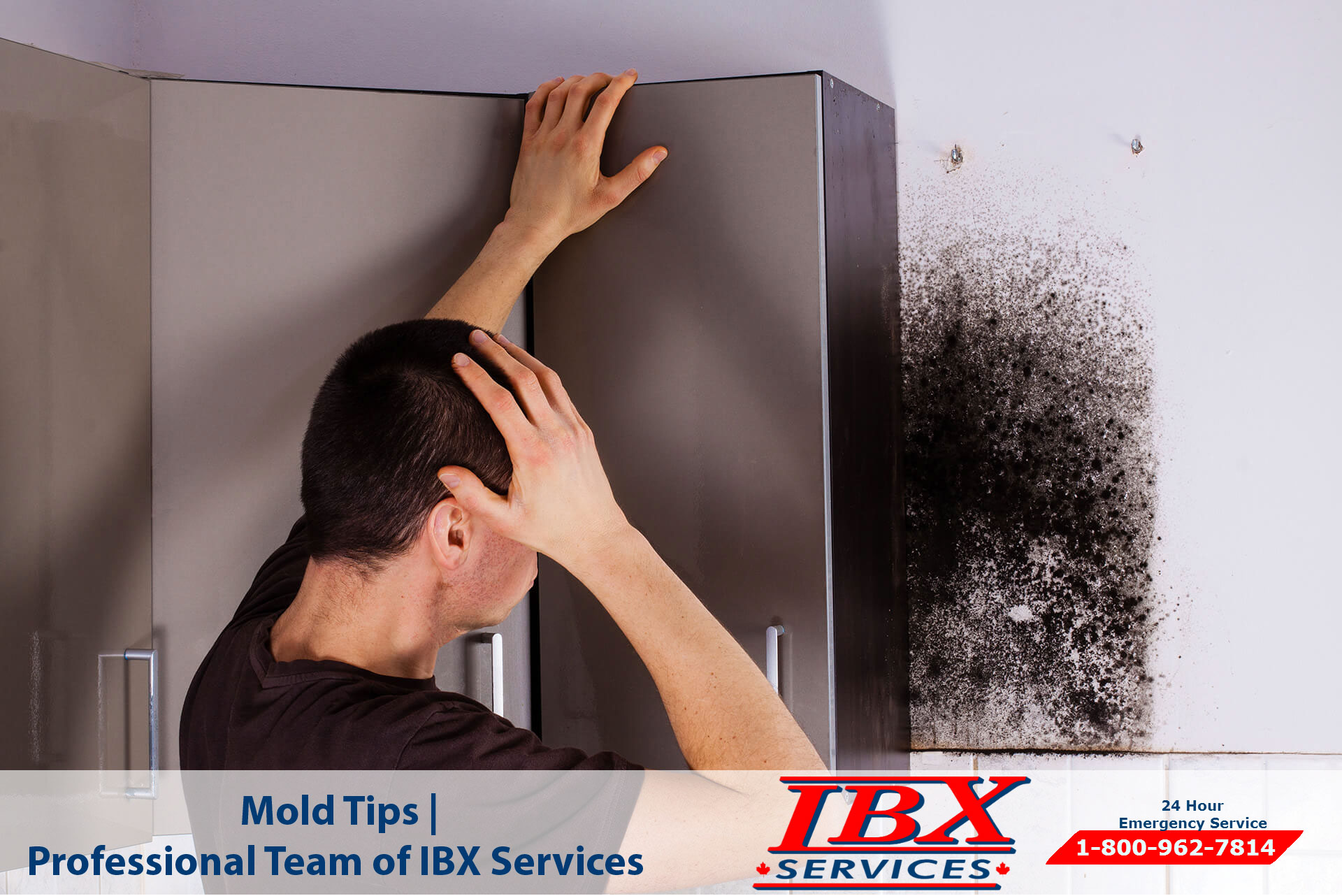 Mold Tips | Professional Team of IBX Services