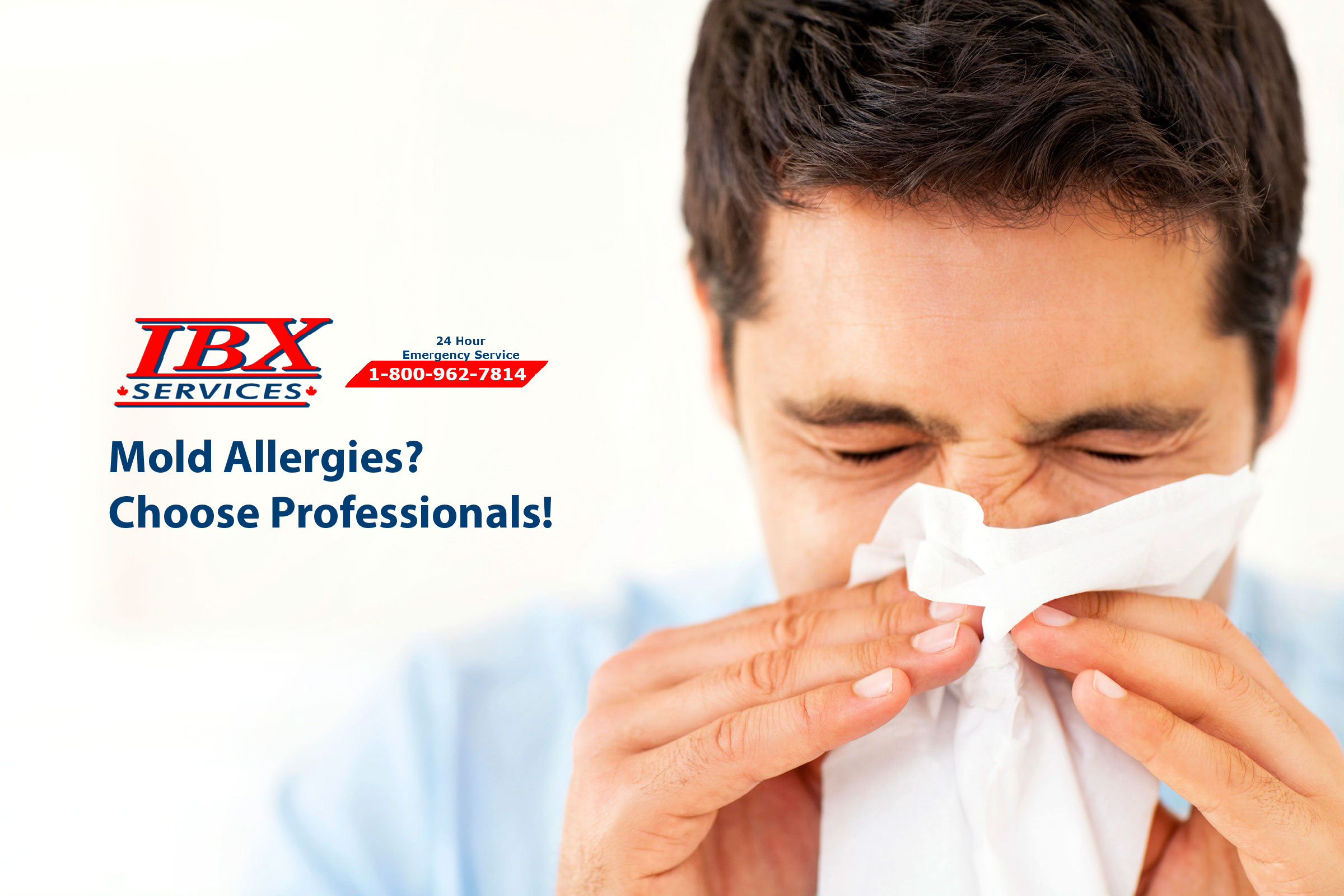 Mold Allergies? Choose Professionals!