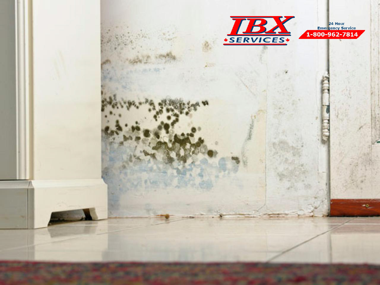 Bathroom Mold – IBX Services Team