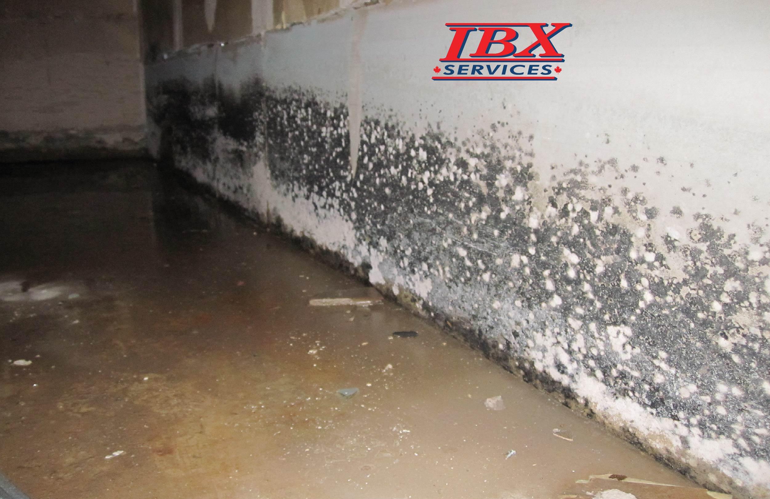 Mold basement