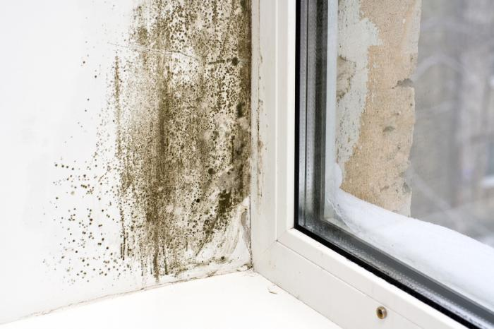 Large patch of black mold next to window.