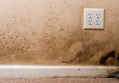What-are-the-Symptoms-of-Mold-and-Mildew-Exposure